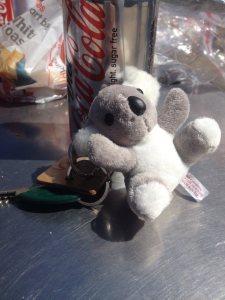 Winners get koalas